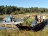 Vassröjning i Båtastan 2013