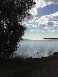 bjork-nere-vid-djursviks-hamn